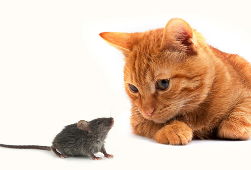 cat_and_mouse.jpg