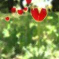 Heart Tulip.jpg